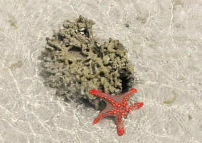 starfish 22