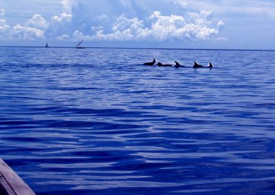 dolphin new boatsnorkeling-south beach 2 dar es salaam