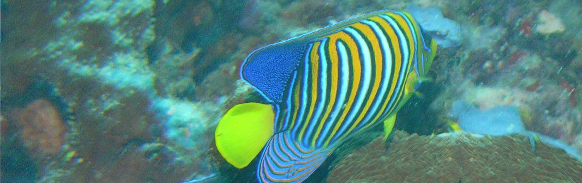 snorkeling-south beach dar es salaam